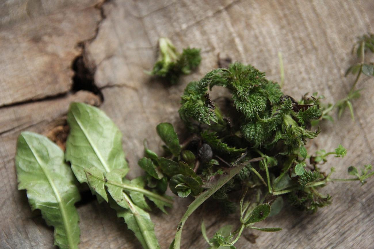 Dary předjaří – Zápisky ze Zahrady